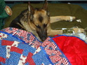 "Like any other wounded American soldier, Athos gets ""Hero Blanket"""