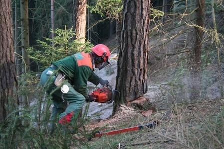 Nabídky práce v lese
